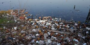 Scientists Win $1.2 Million Prize for Research That Could Make Protein Shakes from Plastic Waste