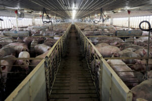 New U.S. rules to protect animal farmers expected soon