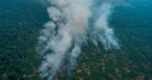Brazil's Amazon rainforest sees deforestation rise for 4th straight month – National